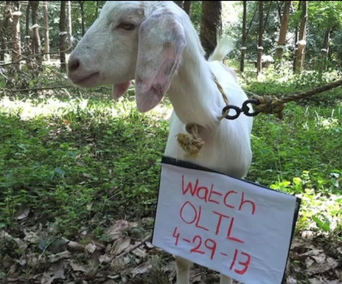 OLTL_goat